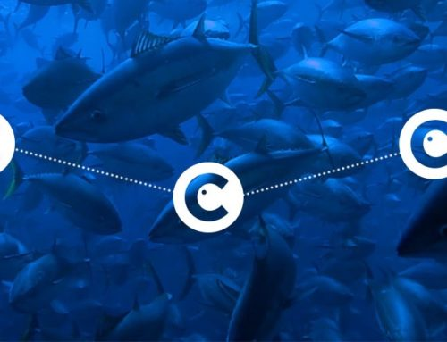 The Crisis in our Oceans: Tokens and blockchain to the rescue?